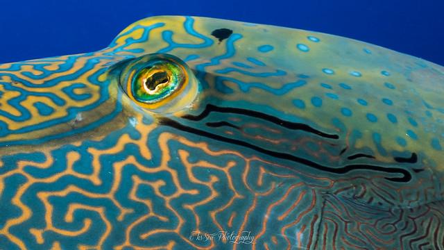 Fish-Art Eye