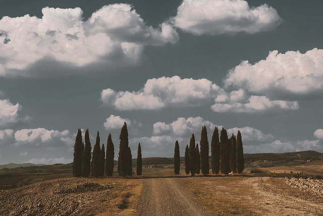 Tuscan Cypresses (on Explore, 7 October 2021)