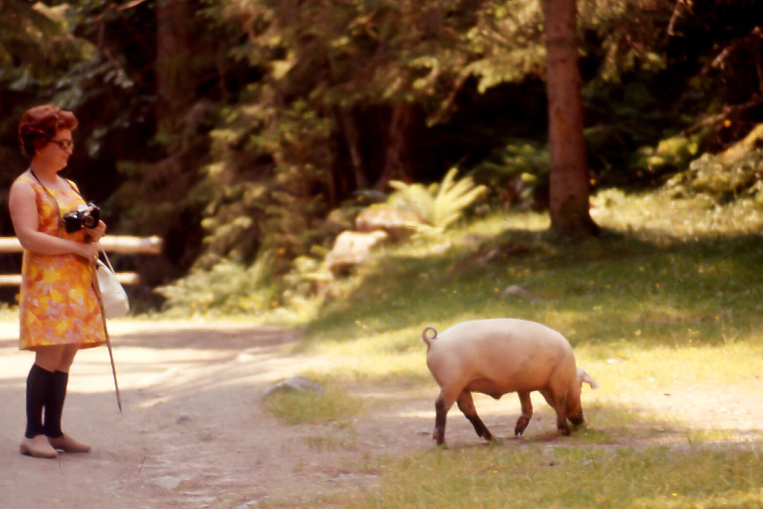 mamy et le cochon
