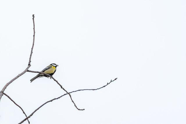 Bird sitting on branch.