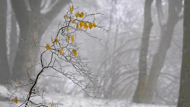 Gocce di giallo