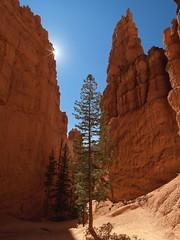 Navajo Loop, Bryce B_10465
