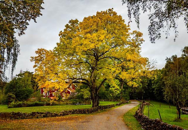 Autumn at Stenung Västergård Farm