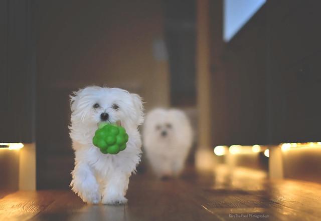 Broccoli...