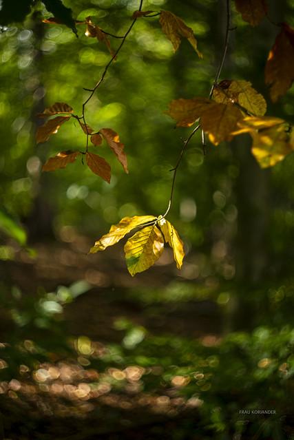 autumn is here II