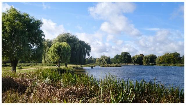 Bushy Park Scenary
