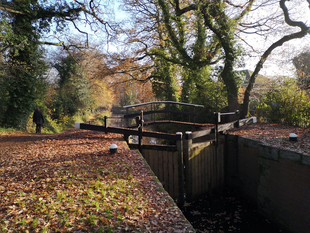 Along the Basingstoke Canal, Woking. Memories from another autumn.