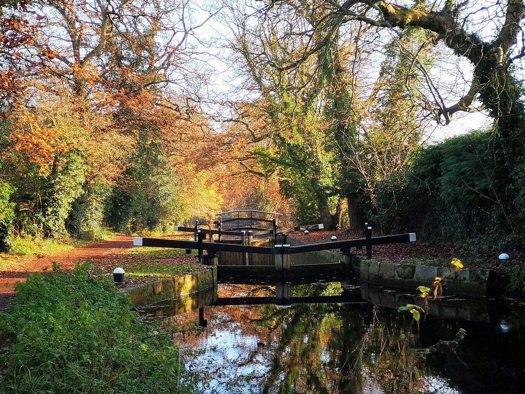 Along the Basingstoke Canal, Woking. Memories from another autumn