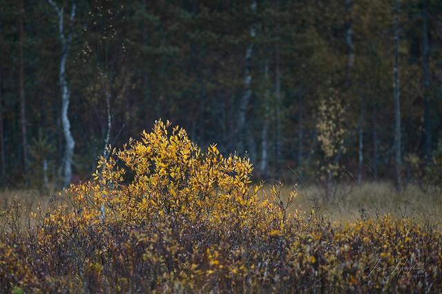 Autumn Fen