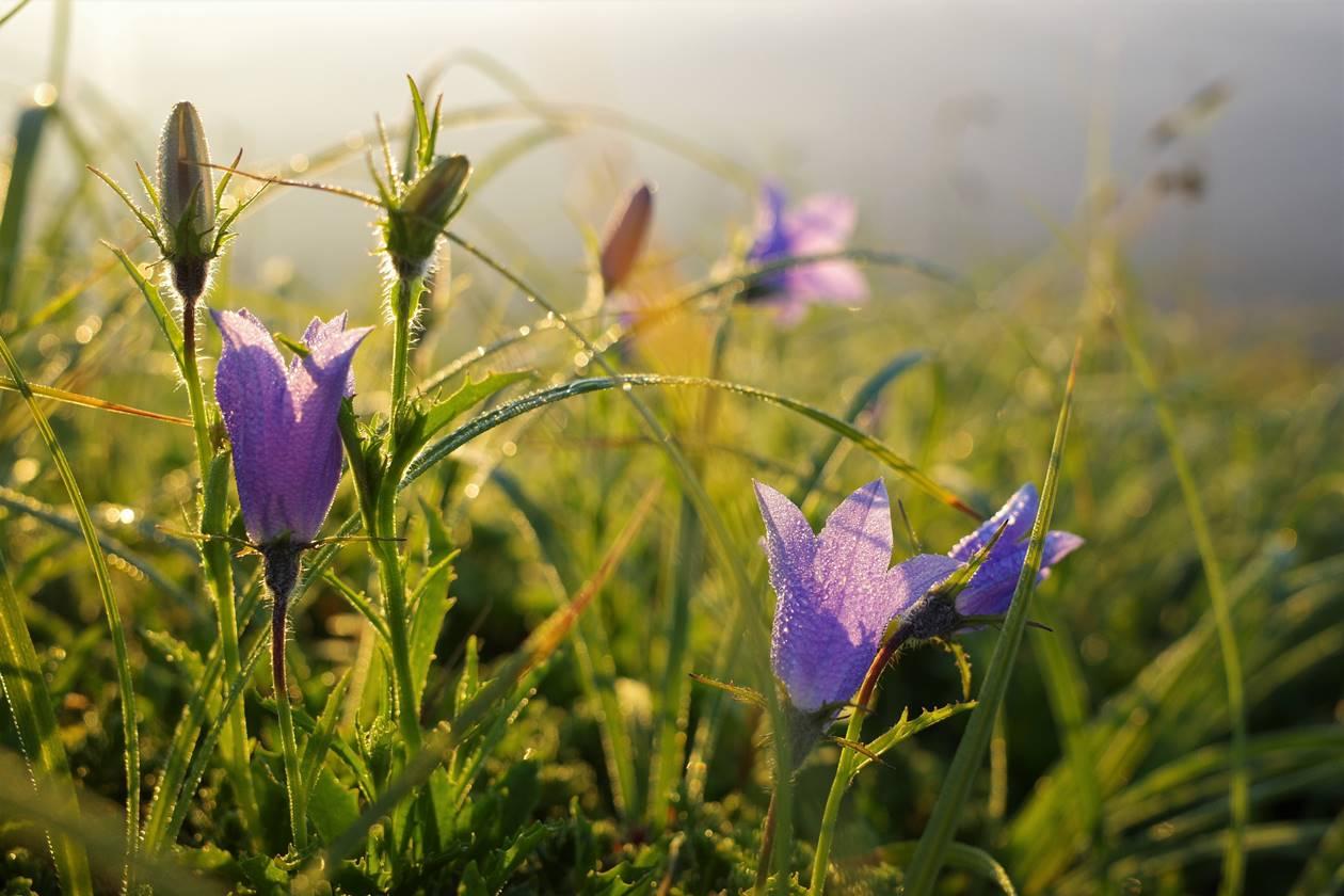 朝日に照らされる花
