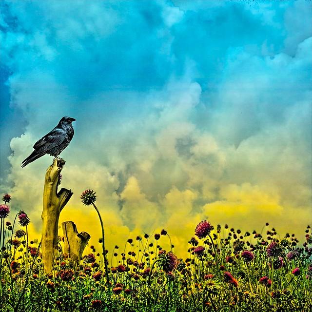 Stratford Ontario ~ Canada ~ Bird & Flowers ~ Shakespearean Garden Botanical ~ Heritage
