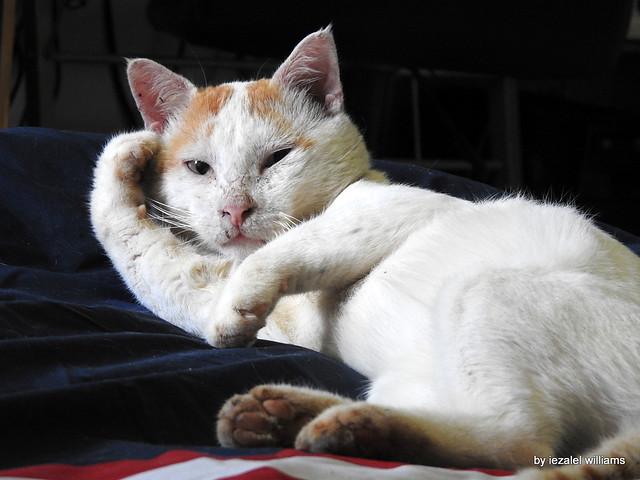 Should I Stay or Should I go?!!! - Cat Arthur  - DSCN6822