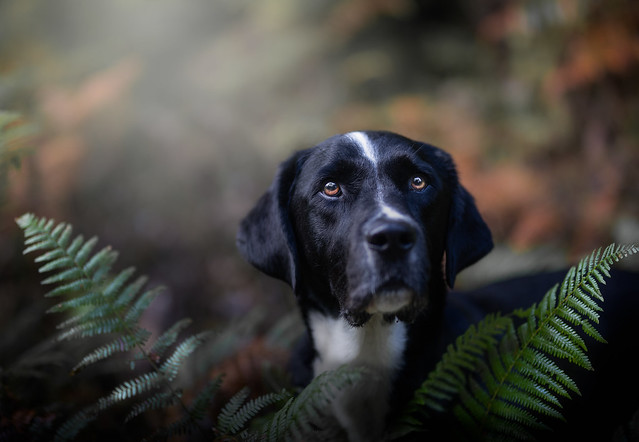 Jesse bear in the woods