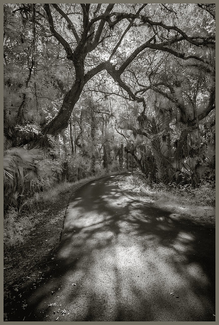 Lake Woodruff Ir #85 2021; Road Through the Swamp, Morning