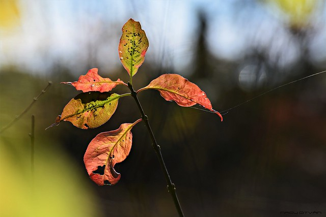 Multicolor Autumn