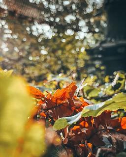 🍁🍂 Herbstferien!  Das Laub ändert die Farbe, die dickeren Jacken werden aus dem Schrank geholt. Und unsere Saison neigt sich dem Ende zu. . . . . #herbstspaziergang #herbstferien #aktivmitkindern #ausflug #rausindienatur #charlotten