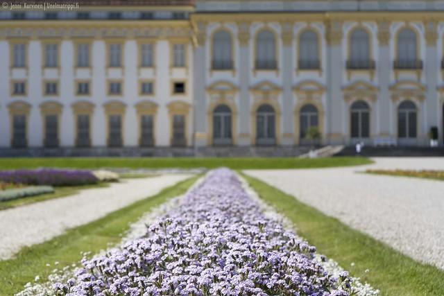 Lila kukkapenkki Neues Schloss Schleissheimin edustalla