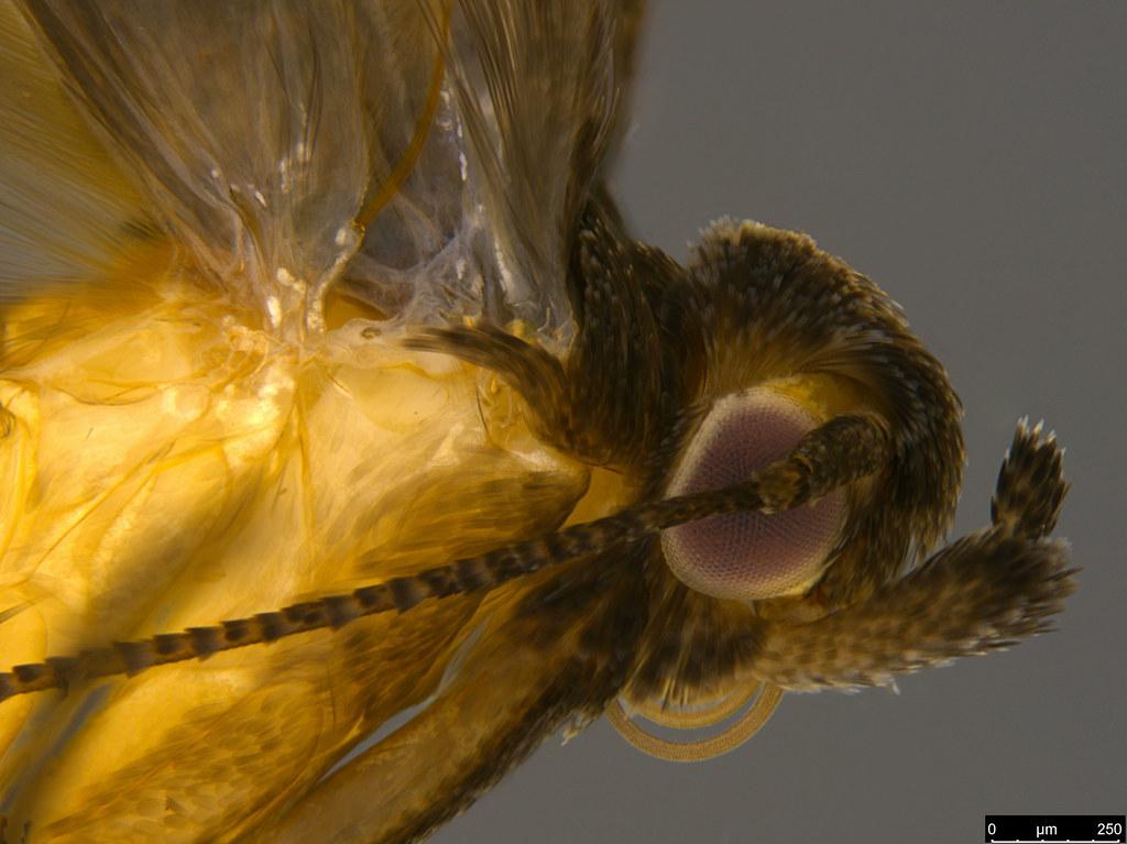 20b - Lepidoptera sp.