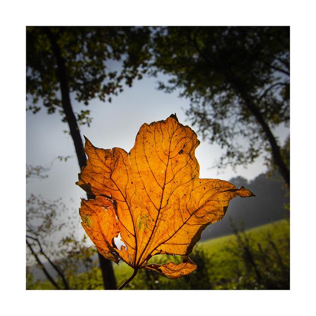Autumn has started visually....
