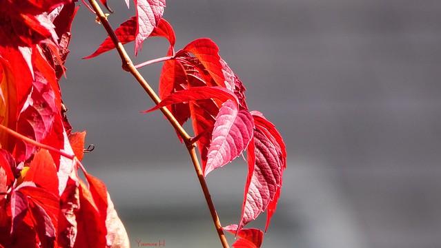 10239 - Leaves