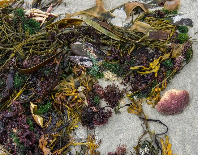 Seaside Salad