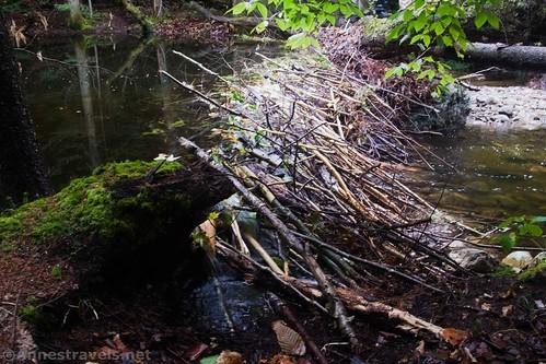 The beaver dam on Indian Pass Creek, High Peaks Wilderness, Adirondack Park, New York