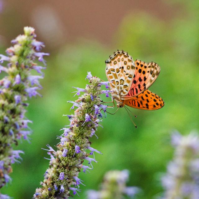 Butterfly III 2021