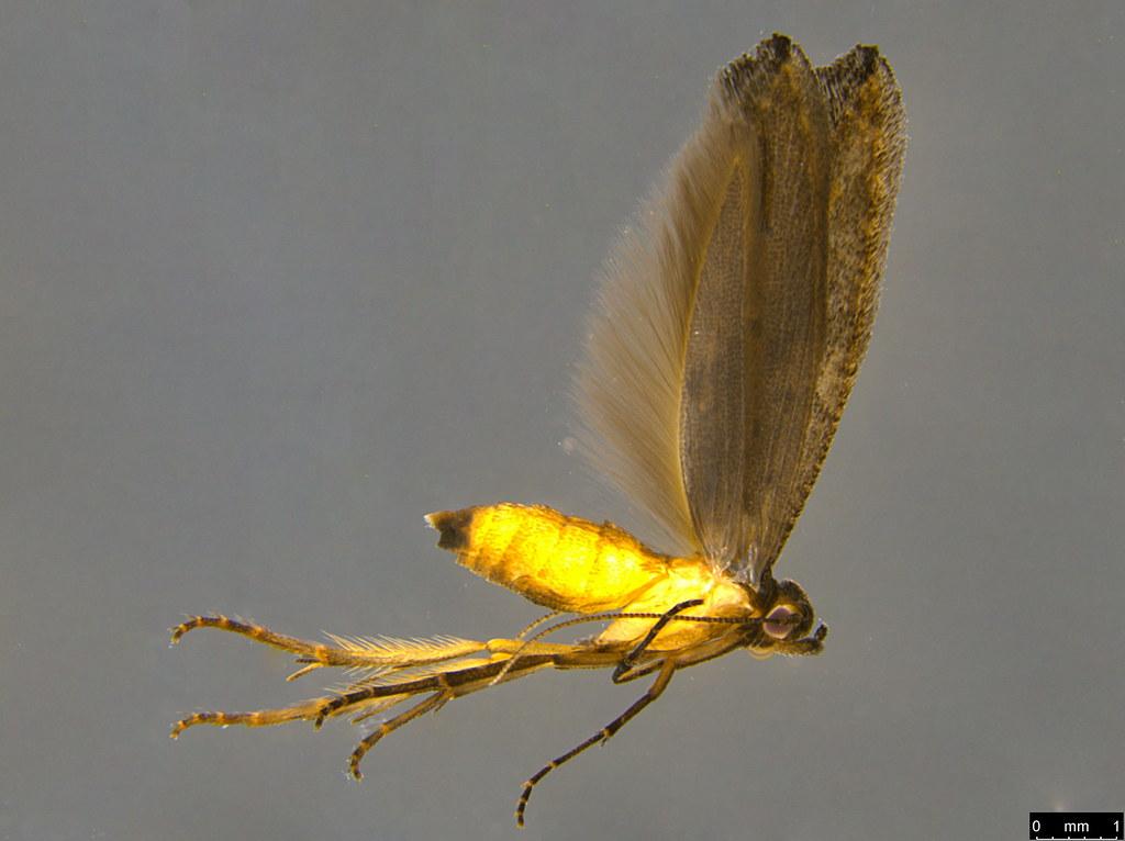 20a - Lepidoptera sp.