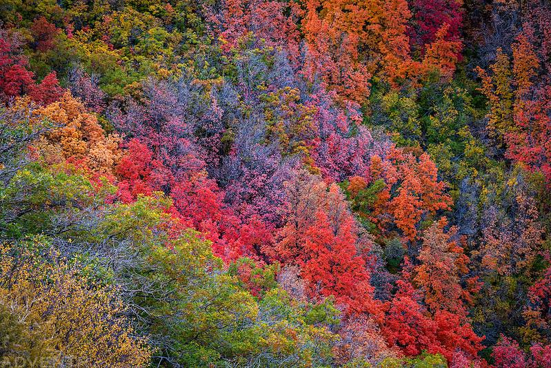 Blue Mountain Rainbow