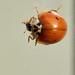 Ladybird - 03
