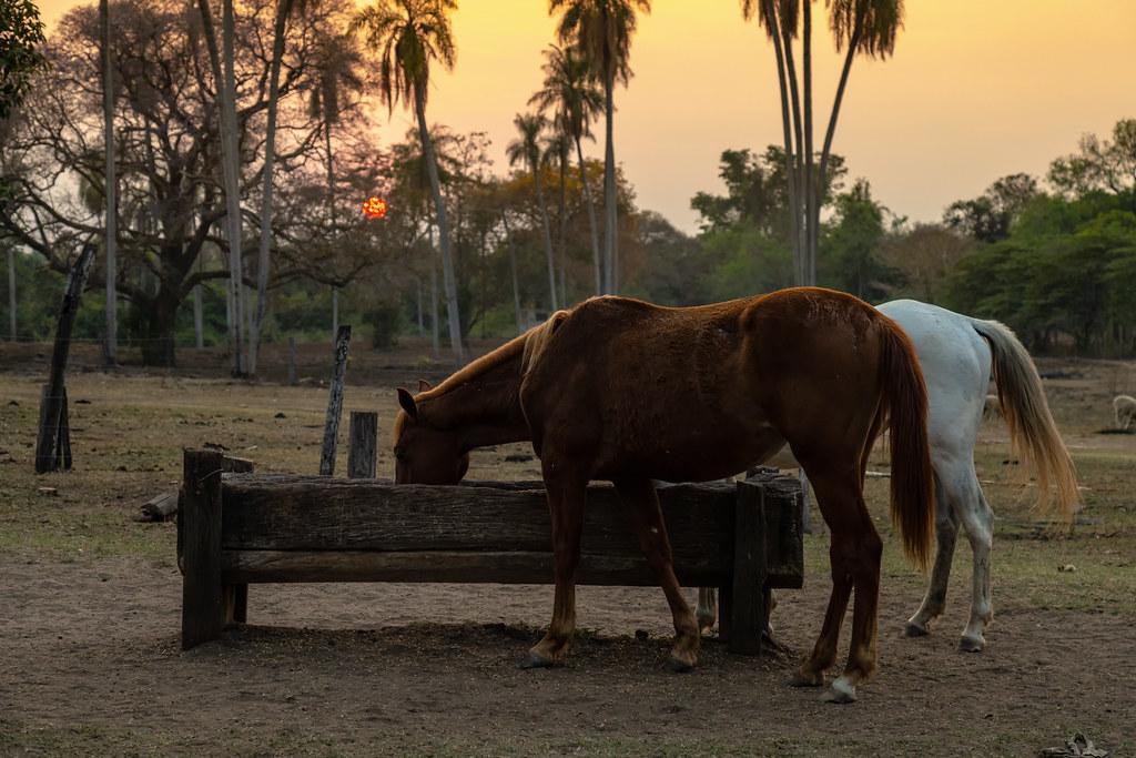 Amanhecendo no Pantanal