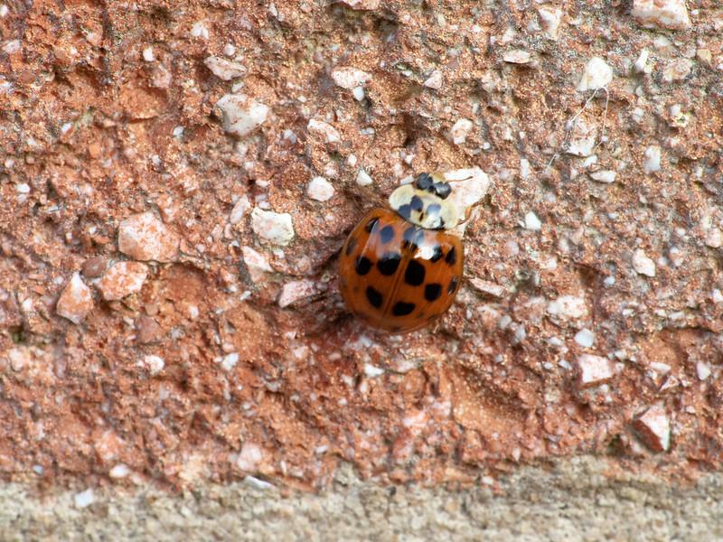 Ladybird - 07