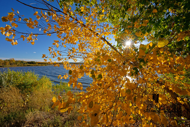 Fall At Cherry Creek Reservoir (Explored)