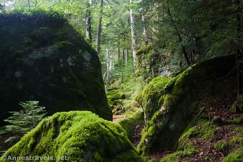 Mossy rocks along the Indian Pass Trail, High Peaks Wilderness, Adirondack Park, New York