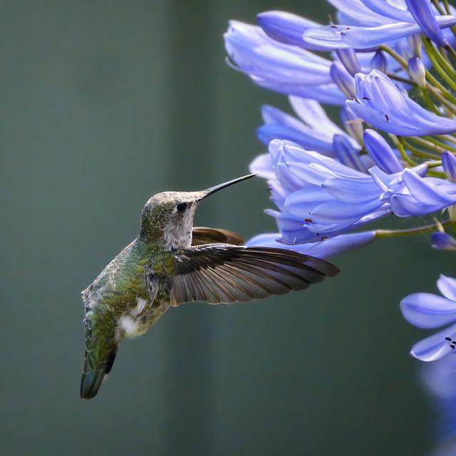 Nectar ahead!