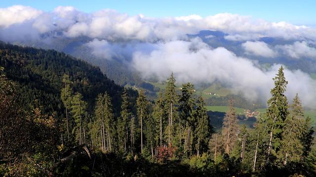Bergwald - Mountain forest