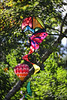 Colors In My Garden...