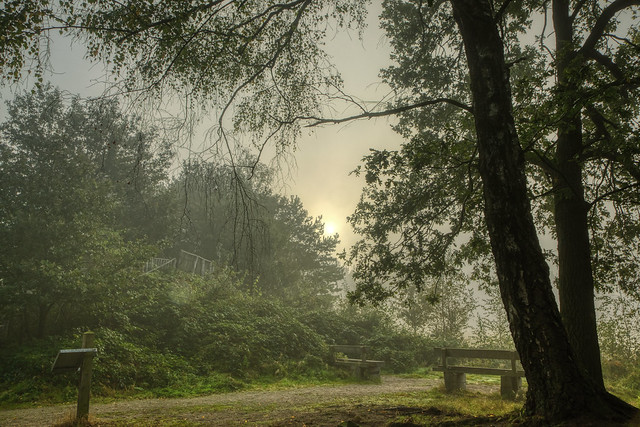 love foggy sunrises..
