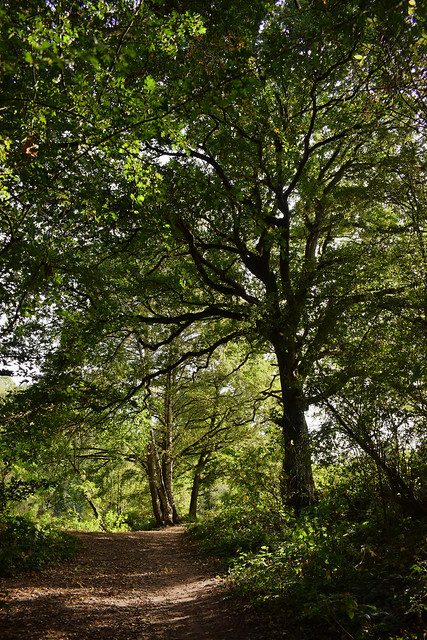 Spa Ponds Reserve