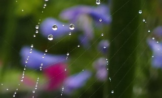 Wisley Web