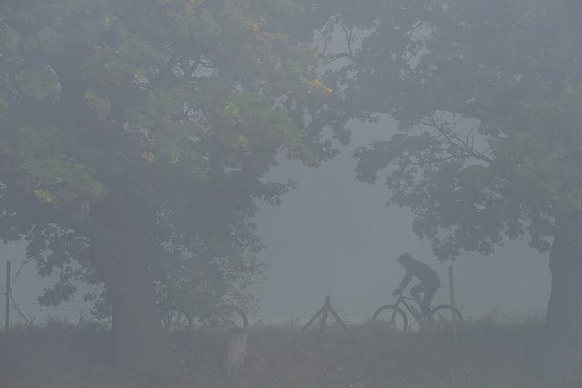 Tree rider