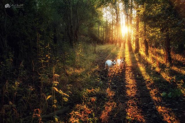Beautiful light... (Explored)