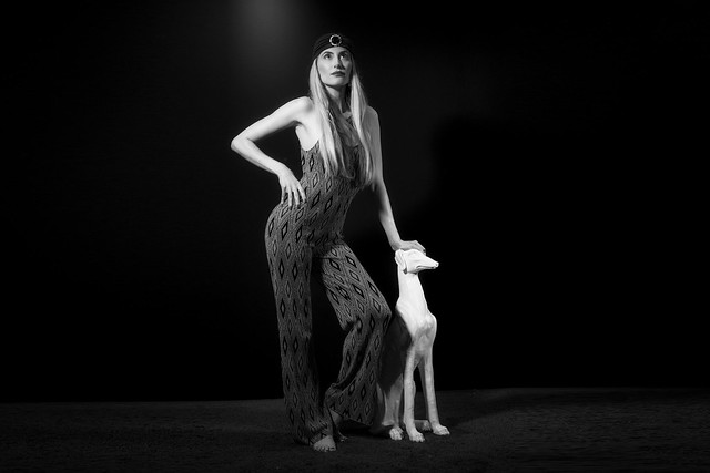 the white dog - studio portrait shooting
