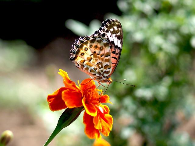 OMD EM1 10.10.2021 butterfly 2