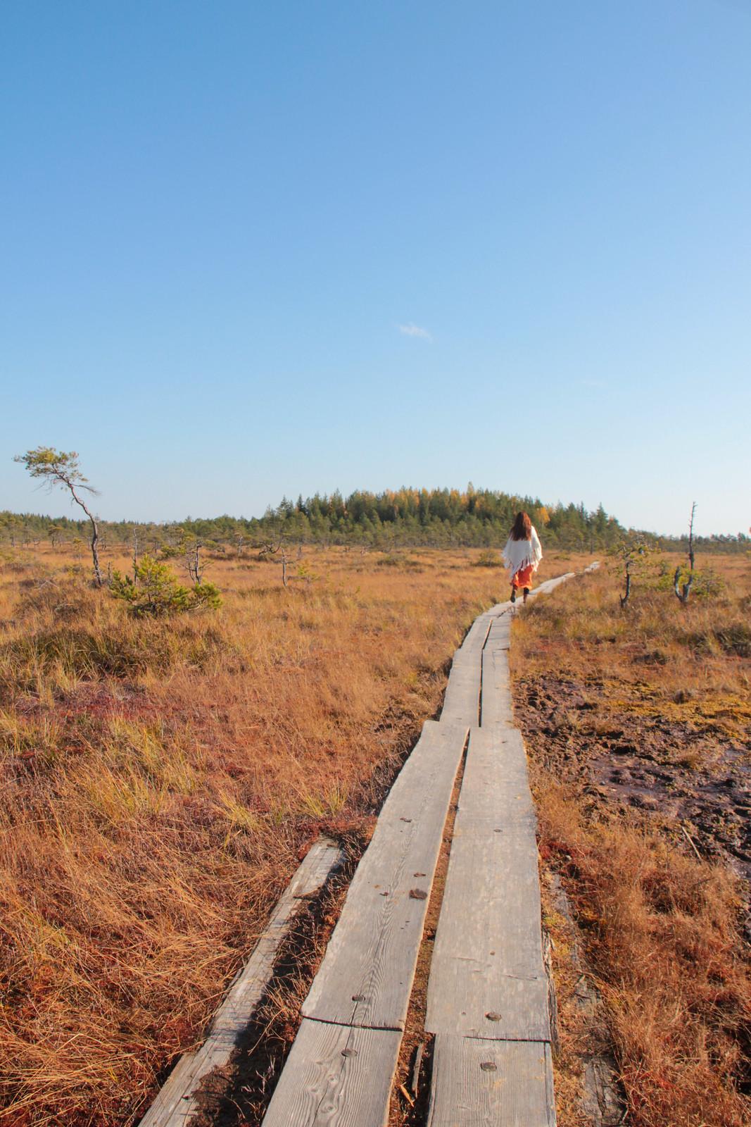 Valkmusan kansallispuiston pitkospuureitillä.
