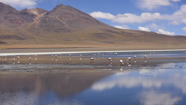 Laguna Pastos Grandes. Bolivia