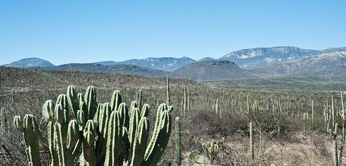 Biosfera Tehuacan-Cuicatlan