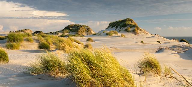 Westenschouwen Dunes