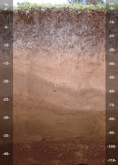 Wairau soil series NZ