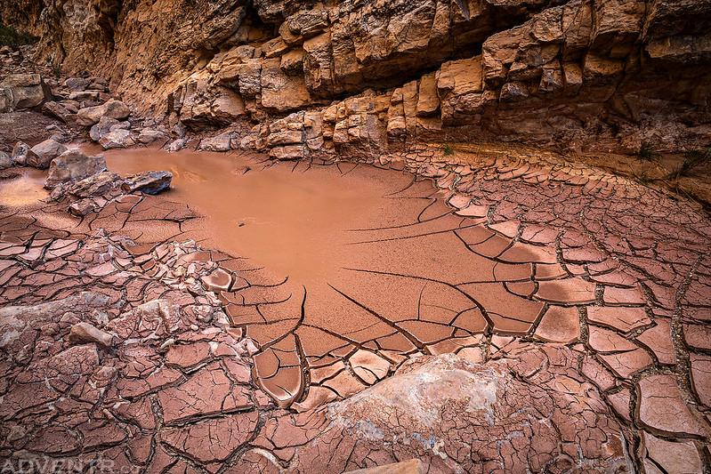 Wet Mud Cracks